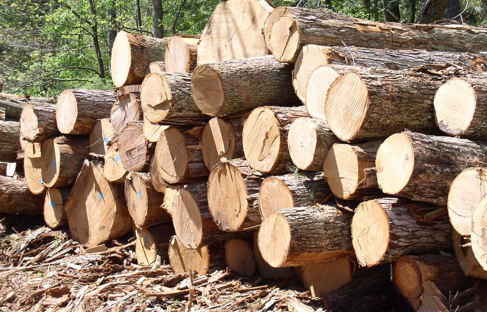 gỗ thông đóng pallet